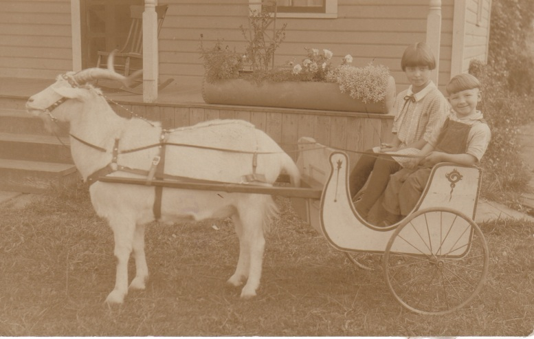 6. clyde & kathryn in a goat cart